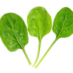 Spinach series on white background